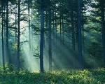 Сънувате, че сте в гора