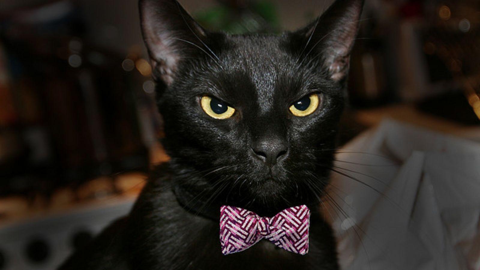 Хелоуин - Вси светии - черни котки