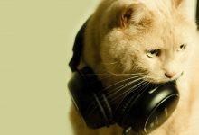 животни и музиката