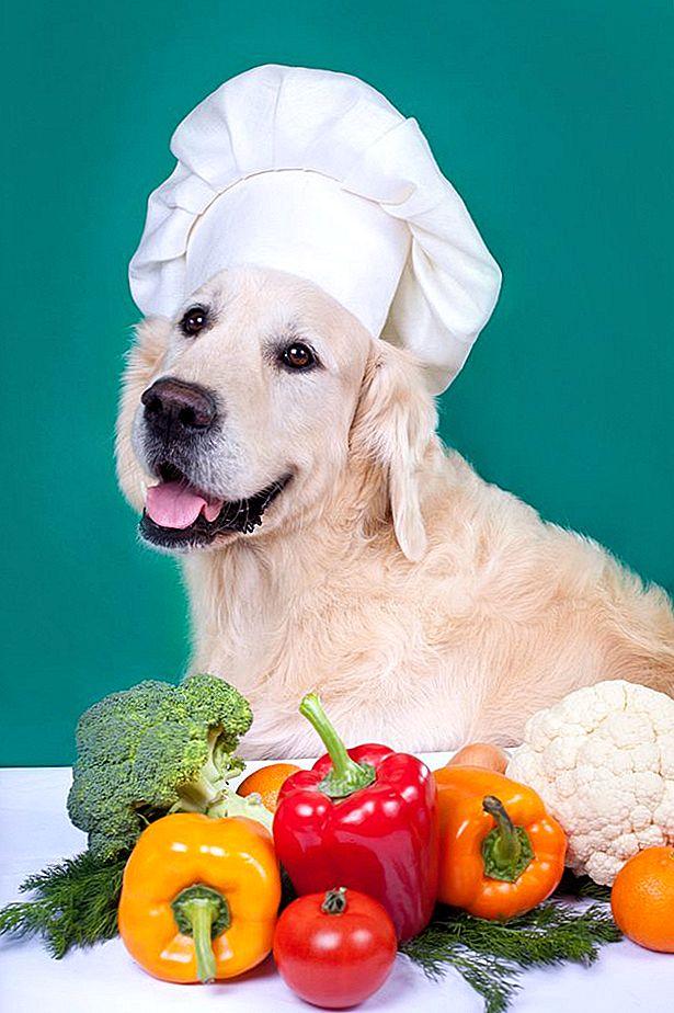Има ли кучета вегетарианци?