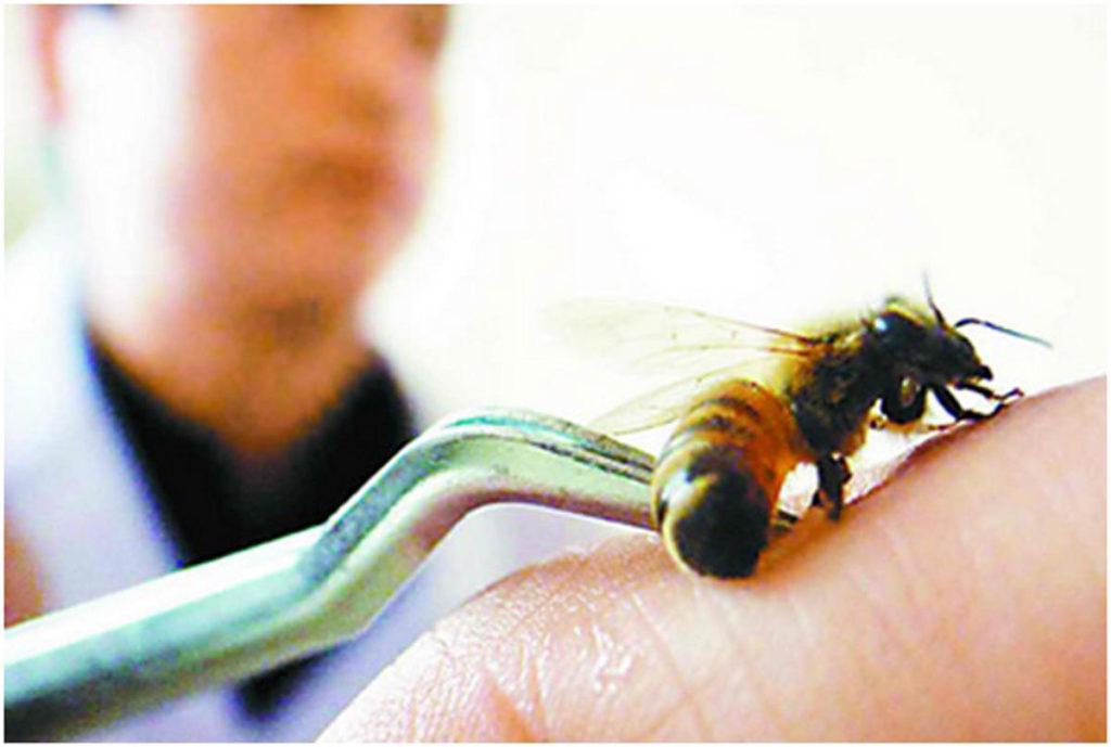 Пчелна отрова срещу тумори