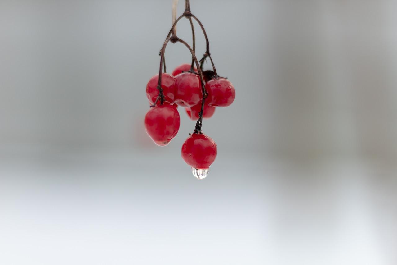 Есенни плодове за здраве и красота - калина