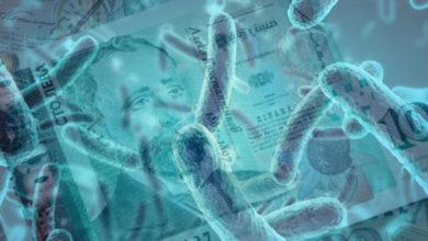 бактерии на парите
