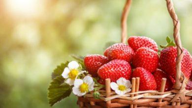 Плодове през пролетта