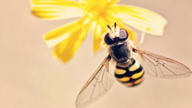 ужилване от оса или пчела