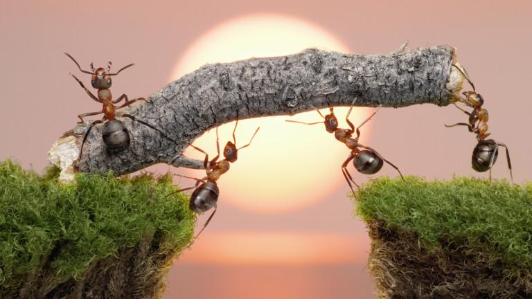 мравки